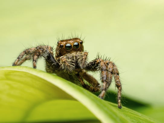 Wanting to avoid a big hairy spider is a normal fear,