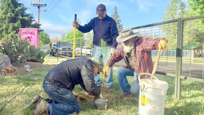 Gila Native Plant Society volunteers Dennis Switzer (left), Curtis Shimp (center) and Elroy Limmer recently planted Desert Broom at Silva Creek Botanical Gardens, home to more than 100 native plant species.