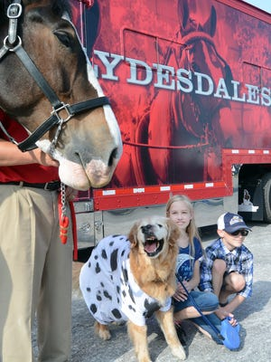 "Siblings Chloe, 10, and Elliot Griffin 8, pose for a photo with Clydesdale Jack along with their dog Molson at Brewery Products Thursday, June 15, 2017. With the help of the sibling's father Tim, the family is completing a ""bucket list"" of items for the dog who is terminally ill. The meeting with the horse fulfilled the item ""meet a famous animal"" from the list. Handler Larry Manypenny presented the horse. Molson was wearing his Dalmatian tshirt for the day. Bill Kalina photo"