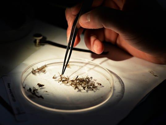 636087819260572729-FTC072516-mosquito-testing-01.JPG