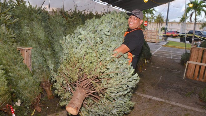Home Depot employee John Cruz prepares a fresh Christmas tree for a customer on Black Friday, Nov. 24, 2017, at The Home Depot in Tamuning.