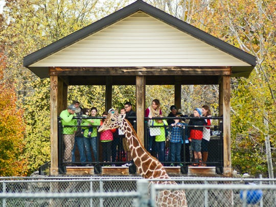 Visitors get an up-close look at Hodari, one of the