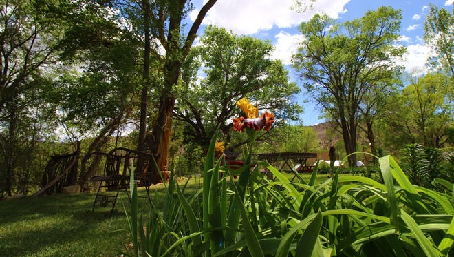 The iris' are in full bloom this time of year at Hondo Iris Farm and Gardens.
