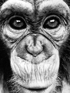 Undated: A closeup of one of the residents of the Safari at Great Adventure.
