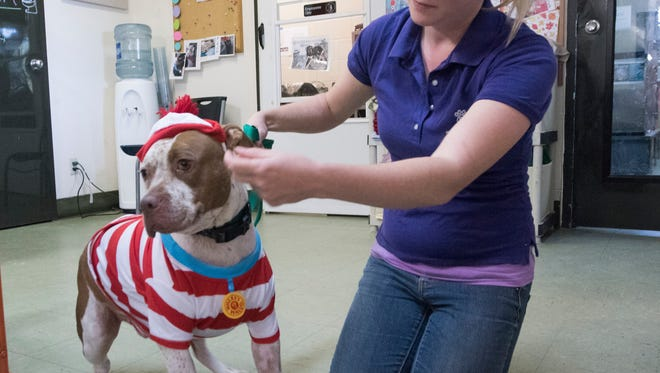 """Melissa Messenger dresses up """"Spott,"""" a mixed-breed dog, for publicity photos at the Pensacola Humane Society on Thursday, Oct. 5, 2017."""