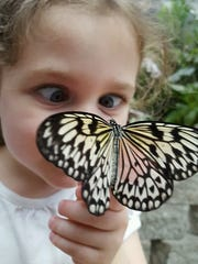 The Butterfly Palace receives 700 to 900 butterflies