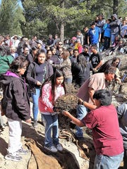 Three days later, the roasted mescal is handed to the waiting community to share and sample, reservng enough for later maiden ceremonies. The first to receive a roasted mescal hearts are future maidens and their families. The hearts will be cleaned, packaged in storage containers and frozens for later use.
