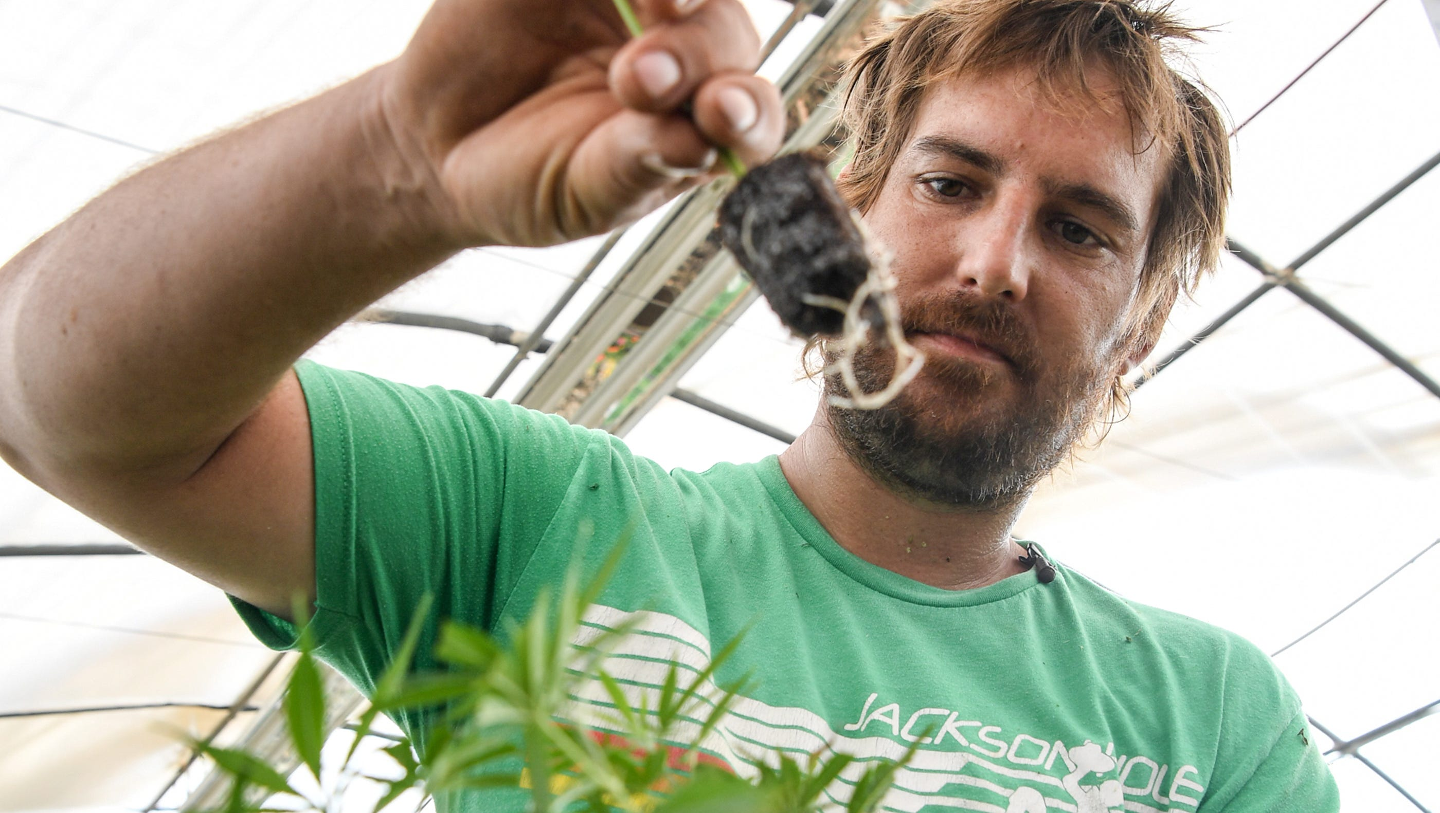 South Carolina Farmers Go All In For Hemp Despite Industry S Risks