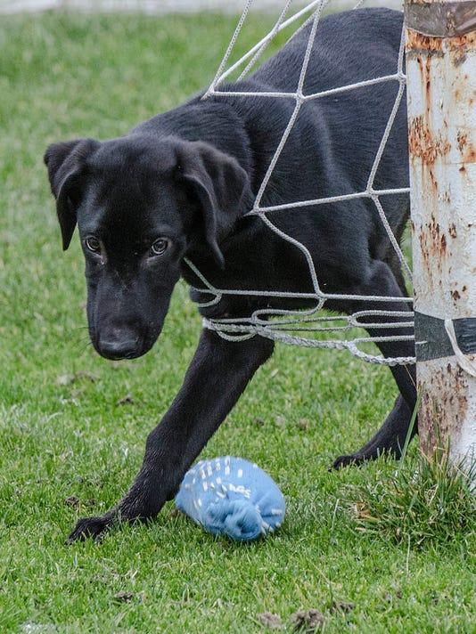 MTO cadaver dogs - grazi in net