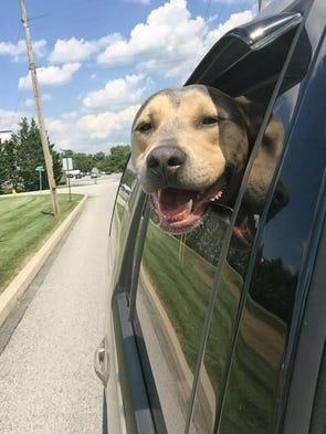 Holly Lane Dog Rescue