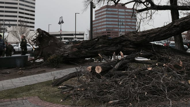 The storm in Reno on Thursday blows down a couple of trees in downtown Reno.