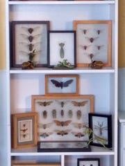 A collection of bugs at Lester Daniels' home.