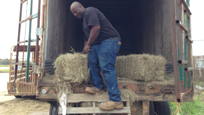 Petrus Feed & Seed Store employee Earl Turner brings bales of hay out of a trailer container Tuesday. A cold front moved through Central Louisiana on Tuesday afternoon, bringing temperatures between 15 to 20 degrees cooler than normal for this time of year. The cooler temperatures should last through the end of this week.