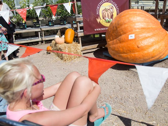 The winning pumpkin weighs in at 1410 pounds during the 8th annual Giant Pumpkin Weigh-Off & Fall Jamboree Sunday, October 2, 2016.
