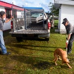 Webber: Invest in what's needed to control feral animals