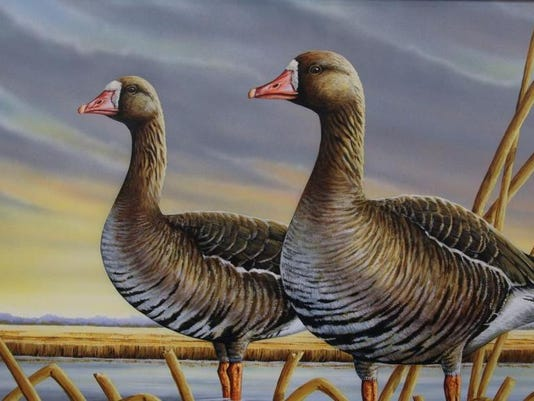 Duck stamp photo