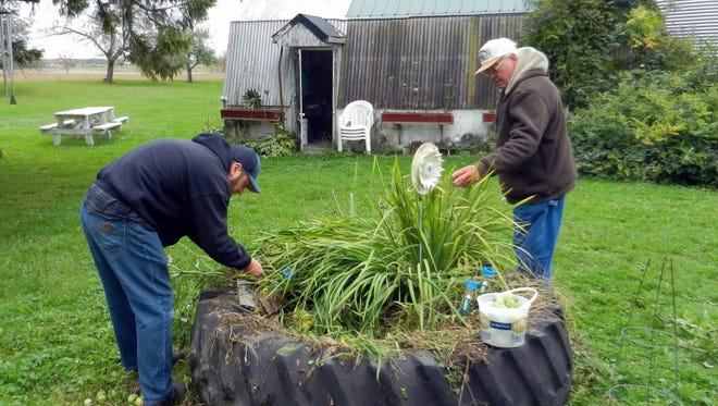 Russ (left) and Bob work together at a raised bed to clean out tomato plants before a possible frost.