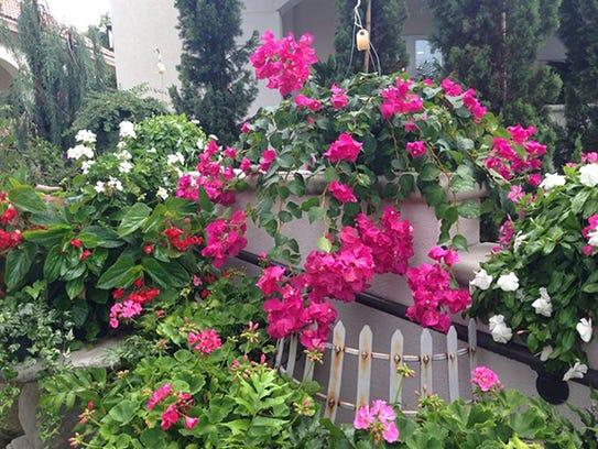 HG Garden plant 3