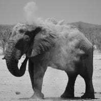 Tracking rare desert elephants in Namibia
