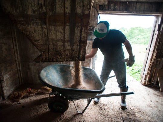 University of Vermont student Drew Anderson, seen gathering pig feed on Friday, July 8, 2016, works as an intern at Agricola Farm in Panton.  His position is one of six internships funded by an anonymous donor through UVM.