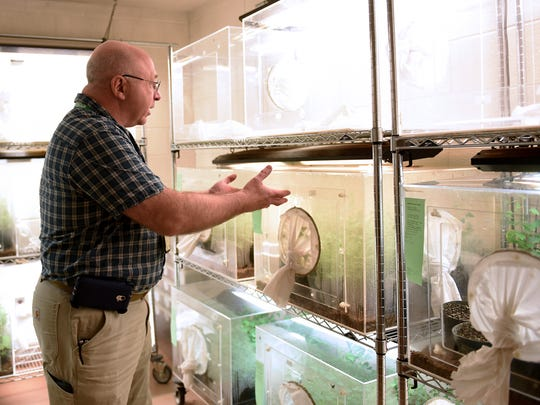 Beneficial Insect Lab Bureau Chief  Mark Mayer shows some insect rearing cases.