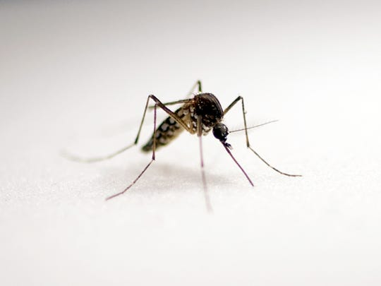 Protect yourself against mosquito-borne illnesses.