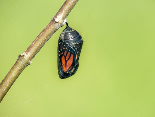 Middlesex County's free Magnificent Monarch Migration