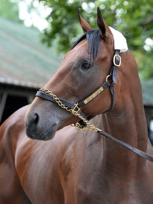American Pharoah at Saratoga.