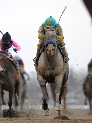 Horses run down the stretch during the Gotham Stakes at Aqueduct.