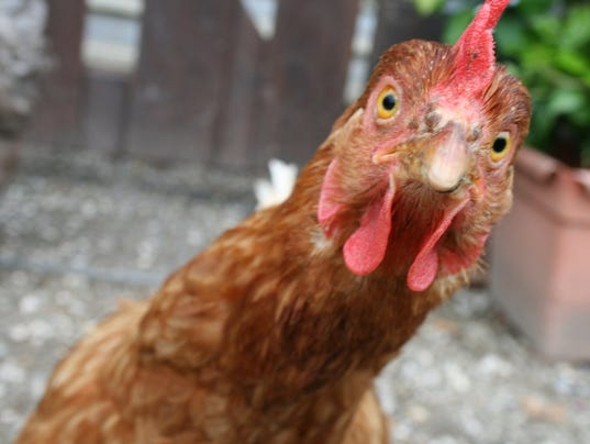-chicken9.jpg