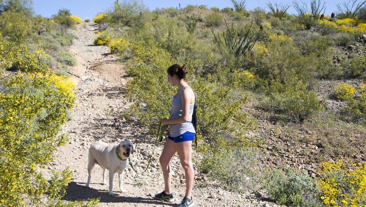 Here's why Money magazine ranks Peoria best city to live in Arizona