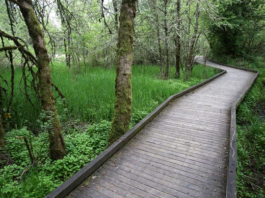 The Pondloop trail is a short 15 minute walk in the Rotary Nature Preserve at Tice Woods.