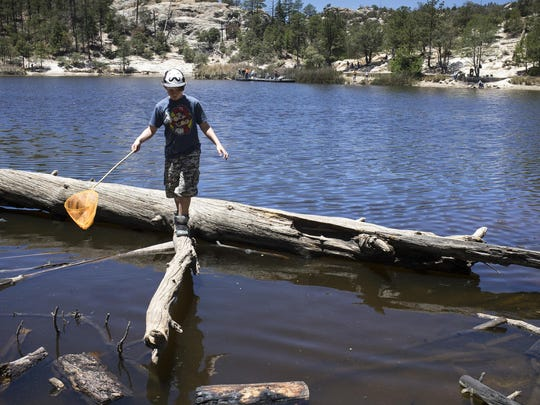 A young boy searches for crawfish in Rose Canyon Lake at Mt. Lemmon.