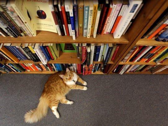 Rose, the store cat for the Book Bin in downtown Salem on Thursday, July 2, 2015.