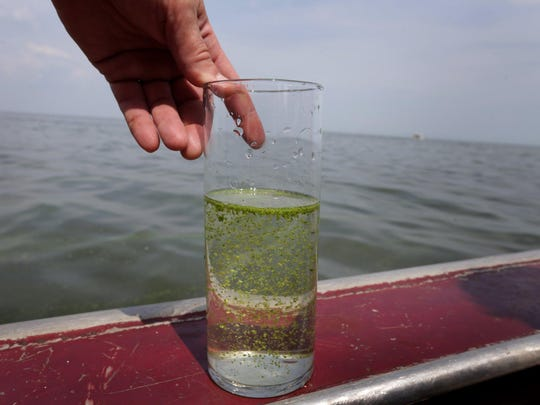 DFP Lake Erie algae (2)