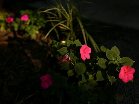 Flowers bloom in the therapeutic community garden Ericka Crane, a registered nurse, helped to start at Our House of Portland, a resource and residence for people living with HIV/AIDS. Photographed in Portland on Wednesday, Aug. 12, 2015.