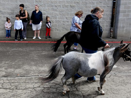 Miniature horses and their handlers walk during a livestock parade at the Oregon State Fair in Salem on Saturday, Aug. 29, 2015.
