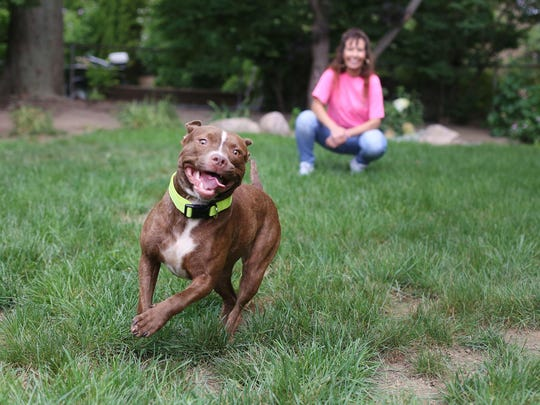 Theresa Sumpter runs a dog rescue nonprofit called