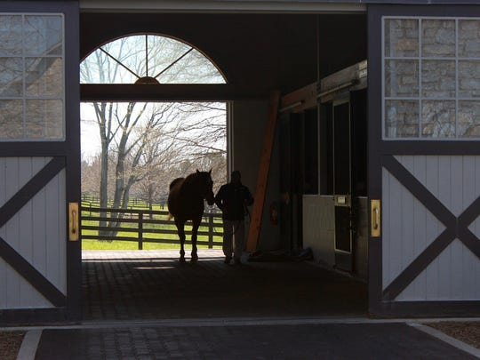 A groom leads Kentucky Derby winner Thunder Gulch at Coolmore America.