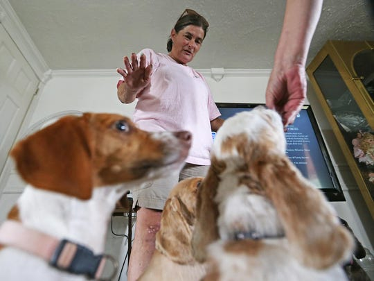 Joanie Brown smiles as a small group of rescue dogs wait for a treat rom April Smith, Speedway, Ind., Friday, July 8, 2016. The dogs now belong to Smith, vice president of Speedway Animal Rescue, and are a few of over 300 animals that Brown has cared for over the years.