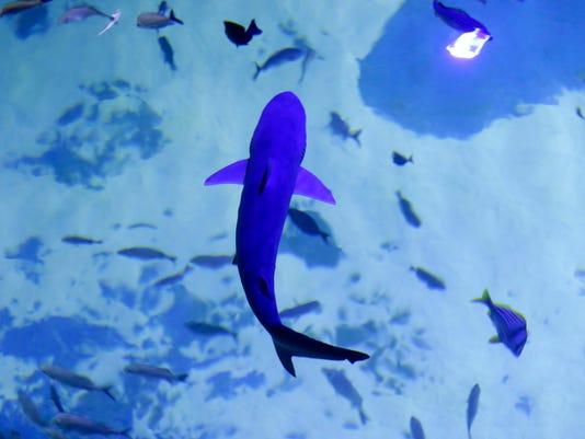 DFP 0108_outlet_aquarium.jpg