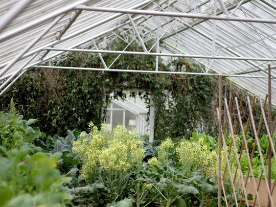 The glass greenhouses at the Pringle Creek Community in Salem on Tuesday, Jan. 27, 2015. Urban gardening classes are beginning Feb. 14 at the greenhouses.