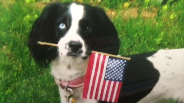 Kenzie shows off her patriotic side this Fourth of July weekend. In a couple of weeks, Roy Kussow and Pam Jansen's all-American girl will trade in the flag for a birthday hat to celebrate her second birthday.