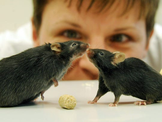 Fotografía muestra a una investigadora observando dos
