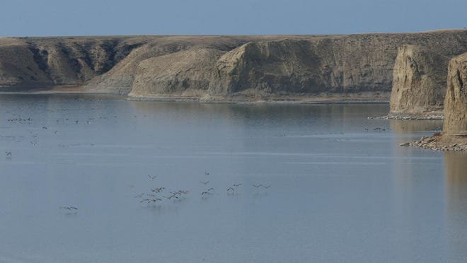 Canada geese fly over the surface of Tiber Reservoir.