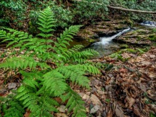 fern falls tonemapped