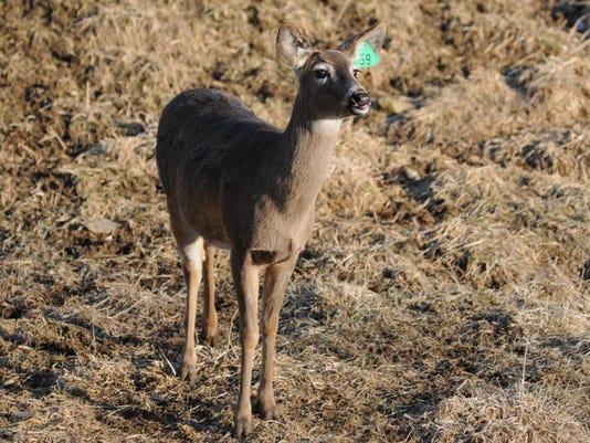 deer farm 01.JPG