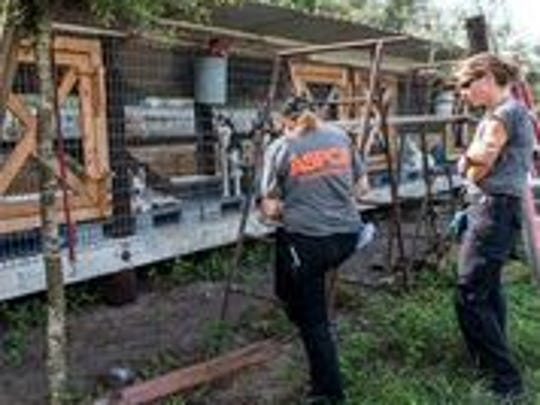 ASPCA memebrs help at the rescue of some 100 dogs  from an unlicensed puppy mill in Clewiston on Monday