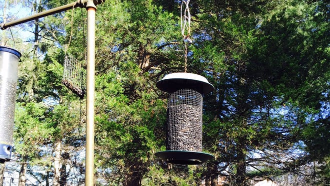 Add bird-friendly plants and feeders to your garden to attract feathered friends year-round.