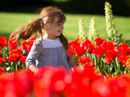 FSF Tulips